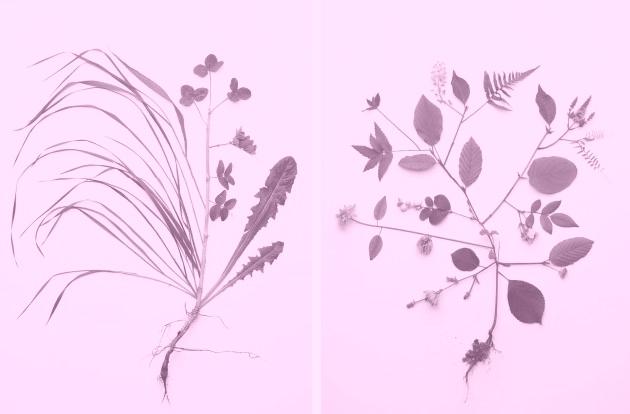 still_flower_013-33373e107a02ad2a86835d6b51a5b791