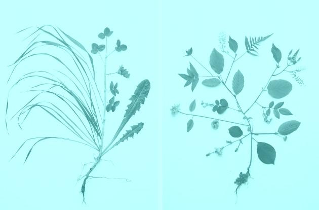 still_flower_013-61deda351ba95f3463f4bd0f78fa1687