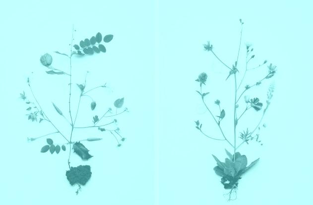 still_flower_01_1-0b568f40cefb87e78c74da1955cebfa7
