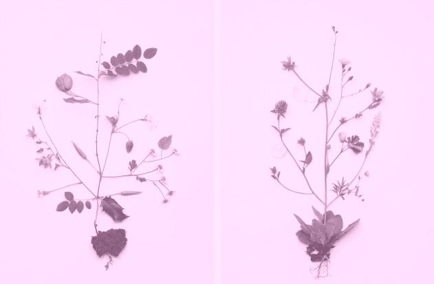 still_flower_01_1-fd544fc3001cb62b0575ba22c95ba1d6